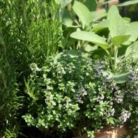 Herbs for your Garden (ITV Course)