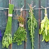 Herbs: For Stress (ITV Course)